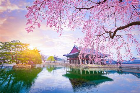 Where to see the most spectacular Cherry blossoms in this
