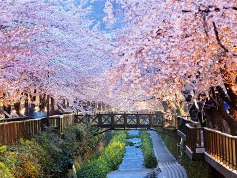 Best time to visit South Korea | On The Go Tours