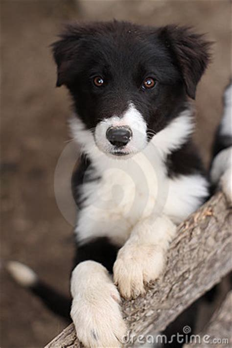 Cute Black And White Puppy Dog Stock Photos - Image: 20107073