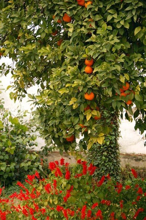 The Best Fruit Trees to Grow in Southern California | Hunker