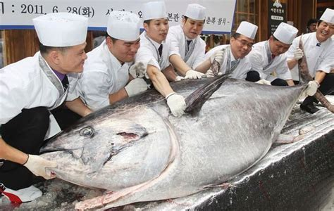 Japanese Sushi Chain Buys One Bluefin Tuna For $736K - Eater