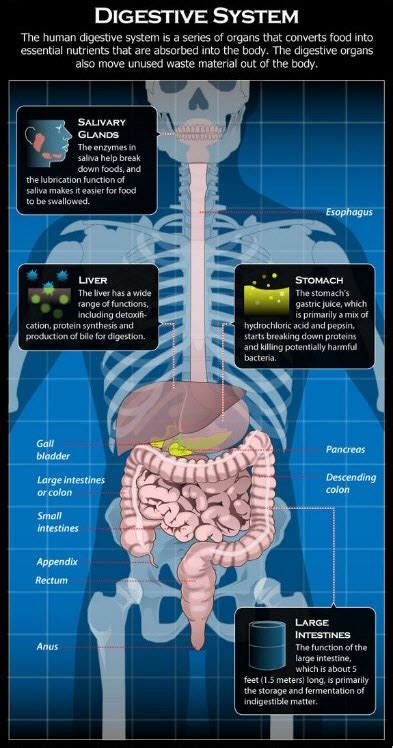 Most Common Digestive System Diseases | New Health Advisor
