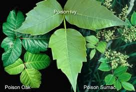 Feeling itchy? Learn how to avoid and treat poison ivy