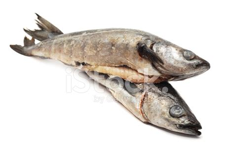 Cod Fish Stock Photos - FreeImages